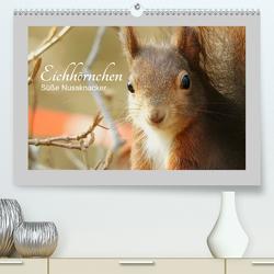 Eichhörnchen – Süße Nussknacker (Premium, hochwertiger DIN A2 Wandkalender 2020, Kunstdruck in Hochglanz) von Fofino