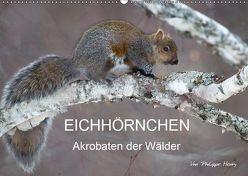 EICHHÖRNCHEN (Wandkalender 2019 DIN A2 quer) von Henry,  Philippe