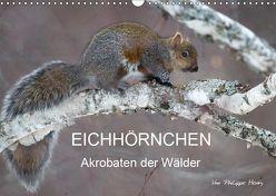 EICHHÖRNCHEN (Wandkalender 2019 DIN A3 quer) von Henry,  Philippe