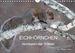 EICHHÖRNCHEN (Wandkalender 2020 DIN A4 quer) von Henry,  Philippe
