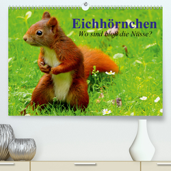 Eichhörnchen. Wo sind bloß die Nüsse? (Premium, hochwertiger DIN A2 Wandkalender 2020, Kunstdruck in Hochglanz) von Stanzer,  Elisabeth