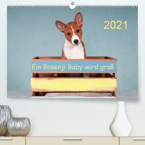 Ein Basenji Baby wird groß (Premium, hochwertiger DIN A2 Wandkalender 2021, Kunstdruck in Hochglanz) von Joswig,  Angelika