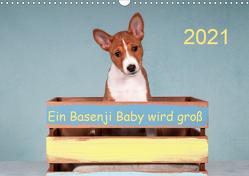 Ein Basenji Baby wird groß (Wandkalender 2021 DIN A3 quer) von Joswig,  Angelika