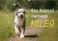 Ein Bobtail namens Miles (Wandkalender 2019 DIN A2 quer) von calmbacher,  Christiane