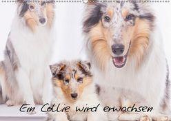 Ein Collie wird erwachsen (Wandkalender 2019 DIN A2 quer) von Hemlep,  Christine