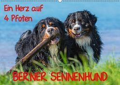 Ein Herz auf 4 Pfoten – Berner Sennenhund (Wandkalender 2019 DIN A2 quer) von Starick,  Sigrid