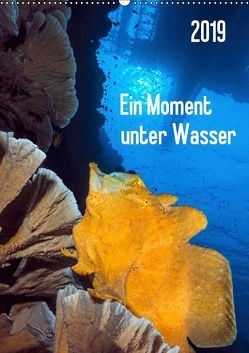 Ein Moment unter Wasser (Wandkalender 2019 DIN A2 hoch) von Jager,  Henry