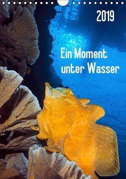 Ein Moment unter Wasser (Wandkalender 2019 DIN A4 hoch) von Jager,  Henry
