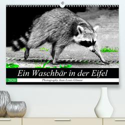 Ein Waschbär in der Eifel (Premium, hochwertiger DIN A2 Wandkalender 2020, Kunstdruck in Hochglanz) von Glineur,  Jean-Louis
