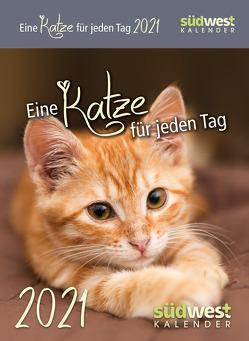Eine Katze für jeden Tag 2021 Tagesabreißkalender