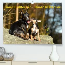 Einmal Bullterrier – immer Bullterrier (Premium, hochwertiger DIN A2 Wandkalender 2020, Kunstdruck in Hochglanz) von Janetzek,  Yvonne