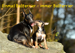 Einmal Bullterrier – immer Bullterrier (Wandkalender 2019 DIN A2 quer) von Janetzek,  Yvonne