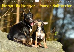 Einmal Bullterrier – immer Bullterrier (Wandkalender 2019 DIN A4 quer) von Janetzek,  Yvonne