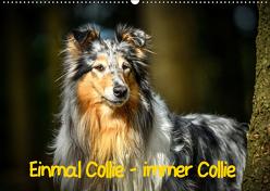 Einmal Collie – immer Collie (Wandkalender 2019 DIN A2 quer) von Janetzek,  Yvonne