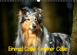 Einmal Collie – immer Collie (Wandkalender 2019 DIN A3 quer) von Janetzek,  Yvonne