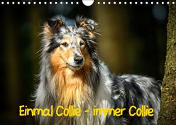 Einmal Collie – immer Collie (Wandkalender 2019 DIN A4 quer) von Janetzek,  Yvonne