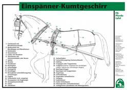 Einspänner-Kumtgeschirr von Deutsche Reiterliche Vereinigung e.V. (FN), FN Bereich Sport,  Abt. Ausbildung, Gross,  Dieter, König ,  Horst, Meier,  Ewald, Spenlen,  Uwe