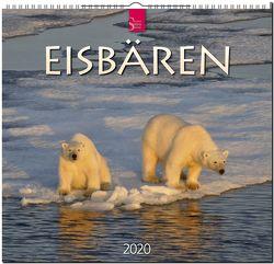 Eisbären von Redaktion Verlagshaus Würzburg,  Bildagentur