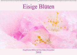 Eisige Blüten (Wandkalender 2019 DIN A2 quer) von Scheurer,  Monika