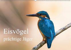 Eisvögel – prächtige Jäger (Wandkalender 2019 DIN A2 quer) von Alberer,  Thomas