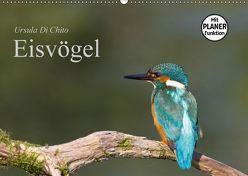 Eisvögel (Wandkalender 2018 DIN A2 quer) von Di Chito,  Ursula