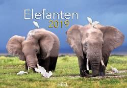 Elefanten 2019