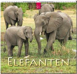 Elefanten von Redaktion Verlagshaus Würzburg,  Bildagentur