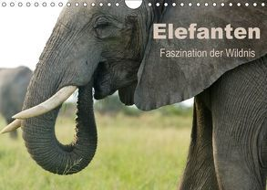 Elefanten – Faszination der Wildnis (Wandkalender 2018 DIN A4 quer) von Haase,  Nadine