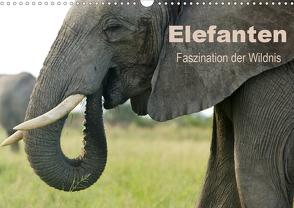 Elefanten – Faszination der Wildnis (Wandkalender 2020 DIN A3 quer) von Haase,  Nadine