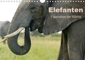 Elefanten – Faszination der Wildnis (Wandkalender 2021 DIN A4 quer) von Haase,  Nadine