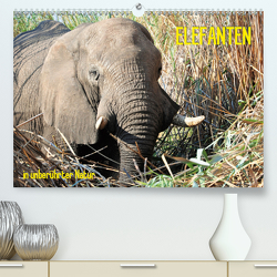 ELEFANTEN IN UNBERÜHRTER NATUR (Premium, hochwertiger DIN A2 Wandkalender 2020, Kunstdruck in Hochglanz) von Goldinger,  Roman