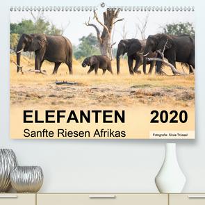 Elefanten – Sanfte Riesen Afrikas (Premium, hochwertiger DIN A2 Wandkalender 2020, Kunstdruck in Hochglanz) von Trüssel,  Silvia