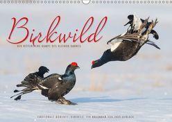 Emotionale Momente: Birkwild (Wandkalender 2018 DIN A3 quer) von Gerlach,  Ingo