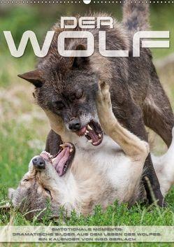 Emotionale Momente: Der Wolf. (Wandkalender 2018 DIN A2 hoch) von Gerlach,  Ingo