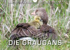 Emotionale Momente: Die Graugans. (Wandkalender 2019 DIN A4 quer) von Gerlach,  Ingo