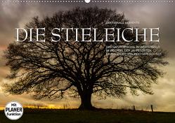 Emotionale Momente: Die Stieleiche (Wandkalender 2020 DIN A2 quer) von Gerlach GDT,  Ingo