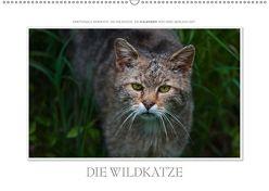Emotionale Momente: Die Wildkatze. / CH-Version (Wandkalender 2018 DIN A2 quer) von Gerlach GDT,  Ingo