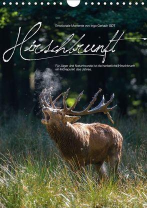 Emotionale Momente: Hirschbrunft / CH-Version (Wandkalender 2018 DIN A4 hoch) von Gerlach GDT,  Ingo