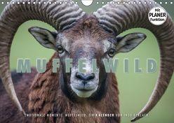 Emotionale Momente: Muffelwild. (Wandkalender 2019 DIN A4 quer) von Gerlach,  Ingo