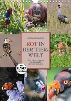 Emotionale Momente: Rot in der Tierwelt (Wandkalender 2018 DIN A4 hoch) von Gerlach GDT,  Ingo
