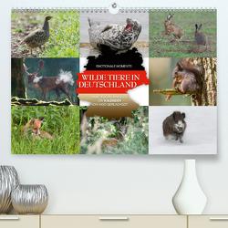Emotionale Momente: Wilde Tiere in Deutschland (Premium, hochwertiger DIN A2 Wandkalender 2021, Kunstdruck in Hochglanz) von Gerlach GDT,  Ingo