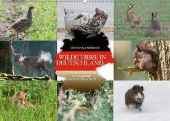 Emotionale Momente: Wilde Tiere in Deutschland (Wandkalender 2019 DIN A2 quer) von Gerlach GDT,  Ingo