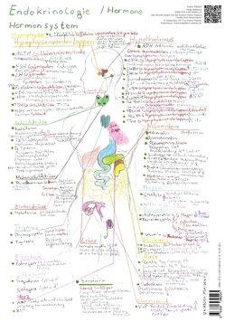 Endokrinologie Hormonsystem – A3 von Rätzke,  Katrin