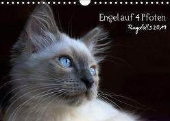 Engel auf 4 Pfoten – Ragdolls 2019 (Wandkalender 2019 DIN A4 quer) von Reiß-Seibert,  Marion