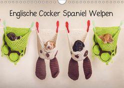 Englische Cocker Spaniel Welpen (Wandkalender 2019 DIN A4 quer) von Wobith Photography - FotosVonMaja,  Sabrina