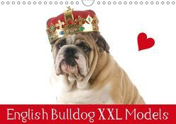 English Bulldog XXL Models (Wandkalender 2019 DIN A4 quer) von Stanzer,  Elisabeth