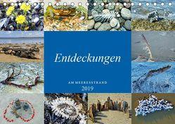 Entdeckungen am Meeresstrand (Tischkalender 2019 DIN A5 quer) von Felix,  Holger