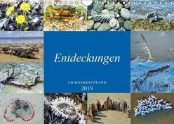 Entdeckungen am Meeresstrand (Wandkalender 2019 DIN A4 quer) von Felix,  Holger