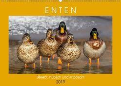 Enten. Beliebt, hübsch und imposant (Wandkalender 2019 DIN A2 quer) von Hurley,  Rose
