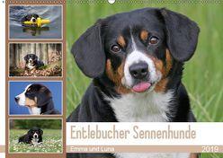 Entlebucher Sennenhunde Emma und Luna (Wandkalender 2019 DIN A2 quer) von SchnelleWelten